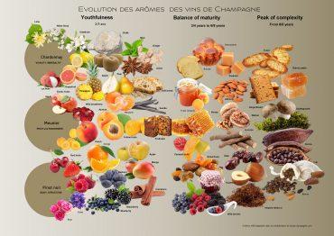 Aroma chart